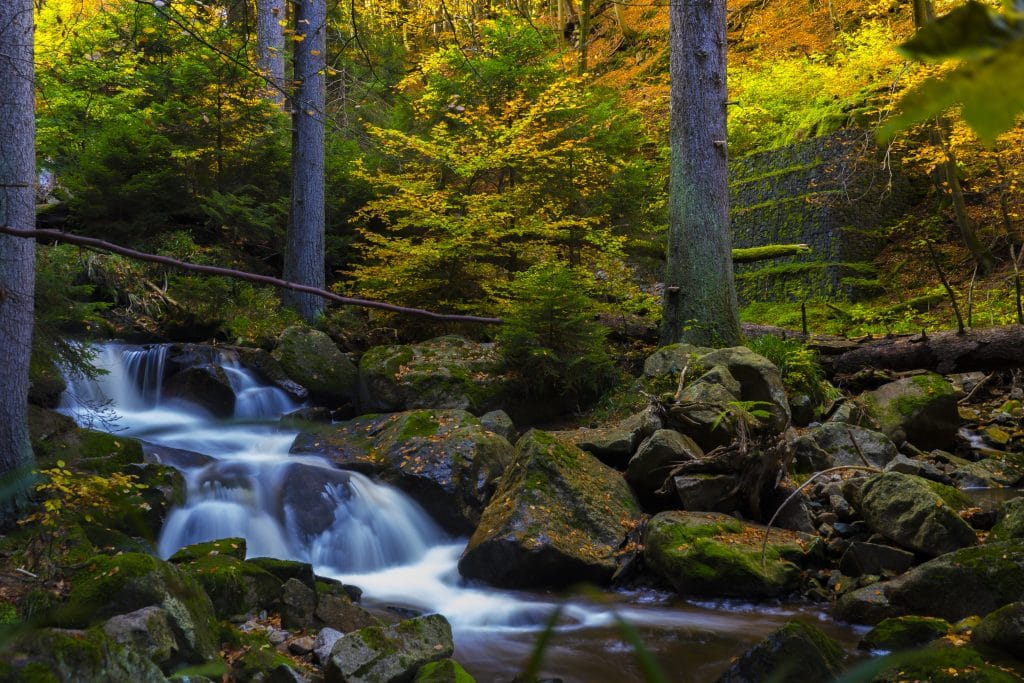 Fall in the forrest with waterfall