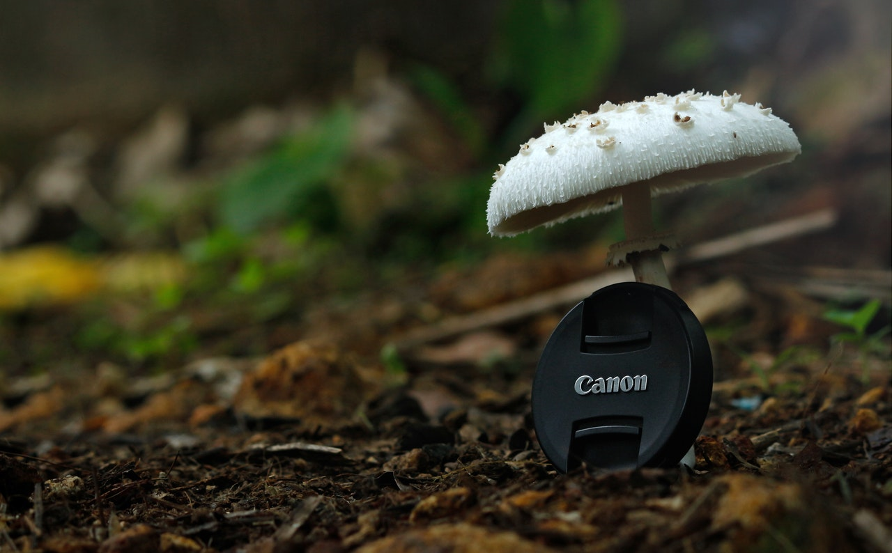 white button mushroom with black canon camera zoom lens