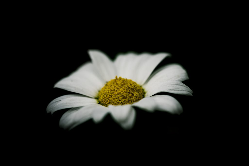 flower in low key